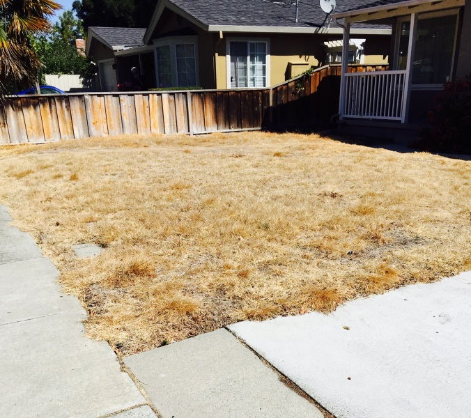 grama seca, a nova ordem